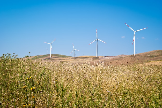 Champ de blé avec des moulins à vent