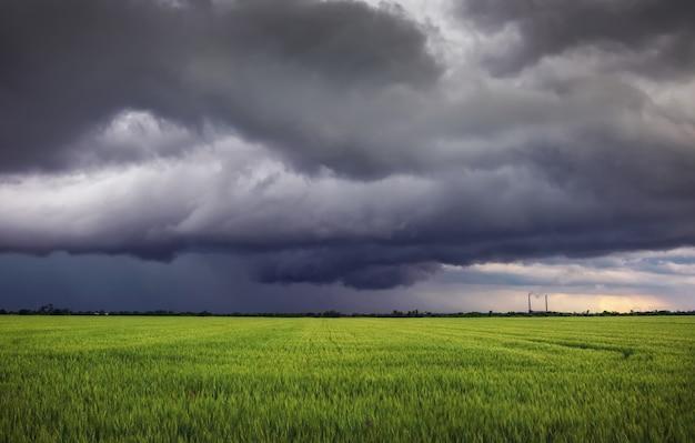 Champ de blé vert et ciel nuageux orageux. paysage dramatique. composition de la nature