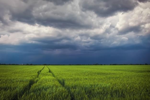 Champ de blé vert avec route et ciel nuageux orageux. paysage dramatique. composition de la nature