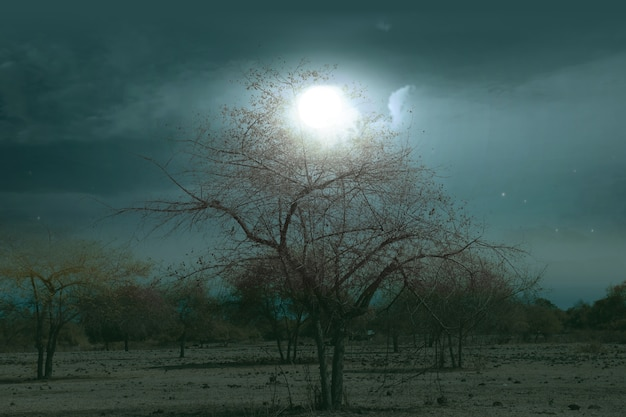 Champ avec brouillard au clair de lune