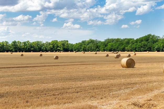 Champ de céréales de blé, d'orge et de seigle récoltées