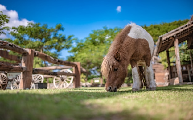 Champ de cheval miniature
