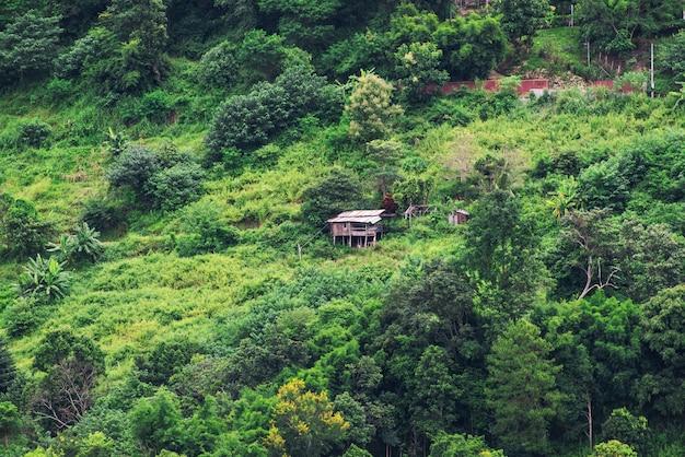 Champ de chou terrasse sur la colline avec chalet à chaingmai, thaïlande.