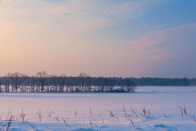 Champ couvert de neige et d'arbres chauves