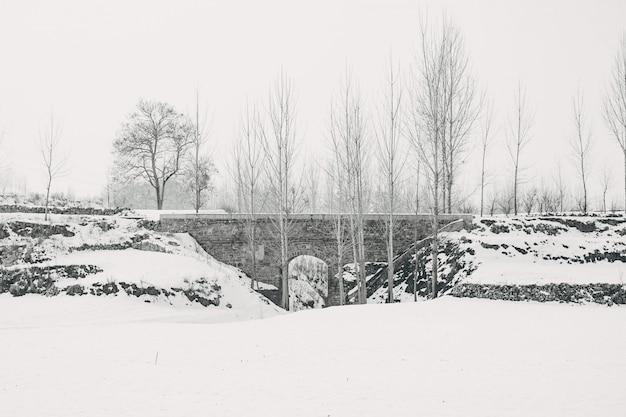Champ couvert de neige et arbres pendant la journée