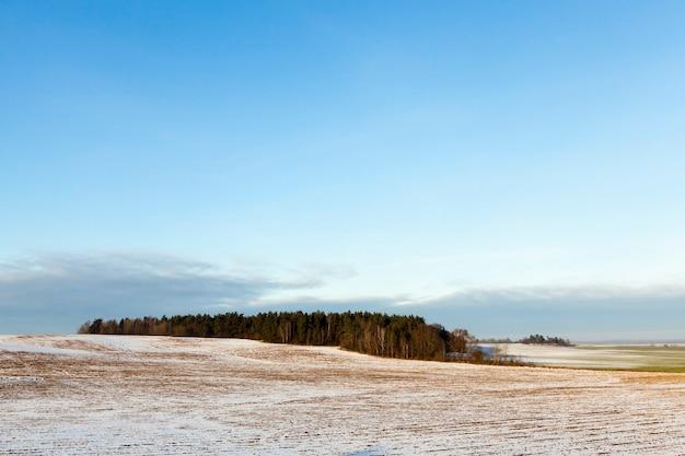 Un champ couvert de neige en hiver. au centre du cadre une forêt est visible. ciel bleu.