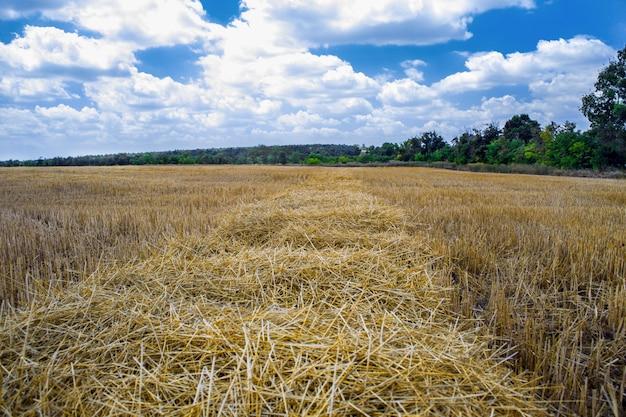 Un champ de cultures après la récolte au soleil d'été