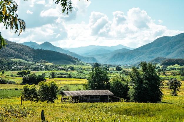 Champ dans le jardin, vue sur la montagne et champs verts par temps clair