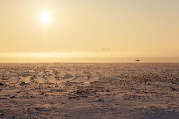 Champ enneigé vide avec brouillard