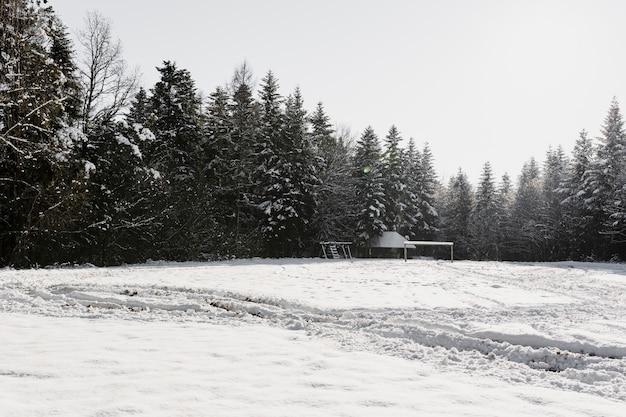 Champ ensoleillé dans la forêt d'hiver