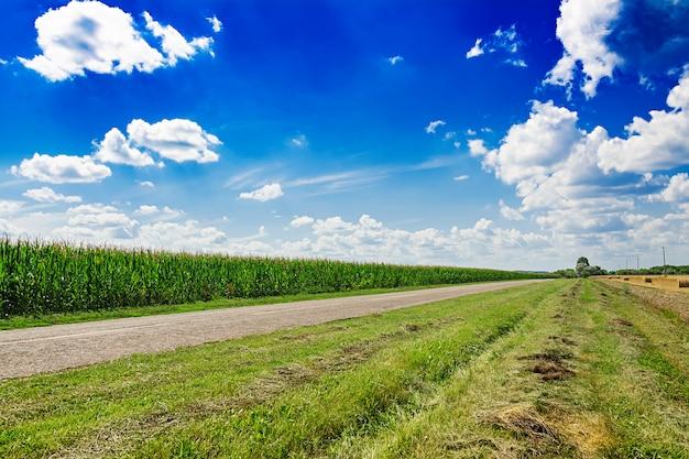 Champ d'été contre le ciel bleu. beau paysage.