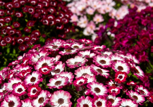Champ avec fleur colorée