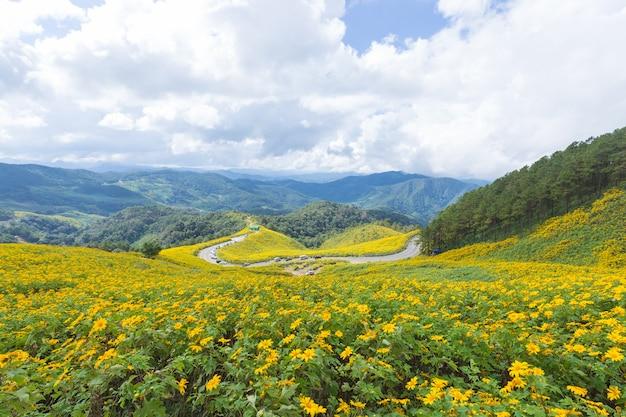 Champ fleur jaune sur la montagne.