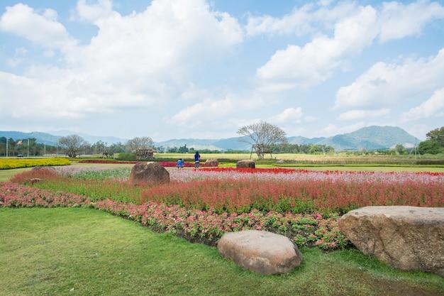 Champ de fleurs à boon rawd farm chiangrai thaïlande