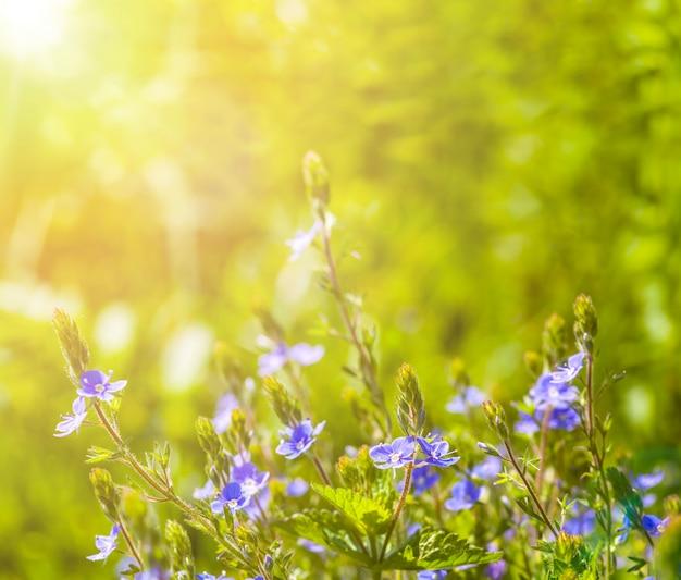 Champ de fleurs sur le ciel. résumé de la nature