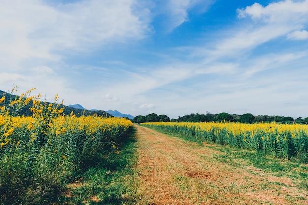 Champ de fleurs jaunes et fond de montagne.