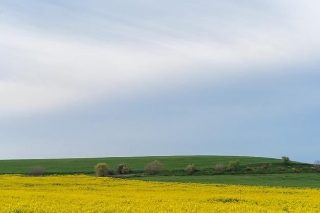Champ de fleurs jaunes sous ciel bleu