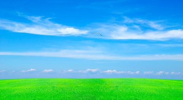 Champ sur fond de ciel bleu