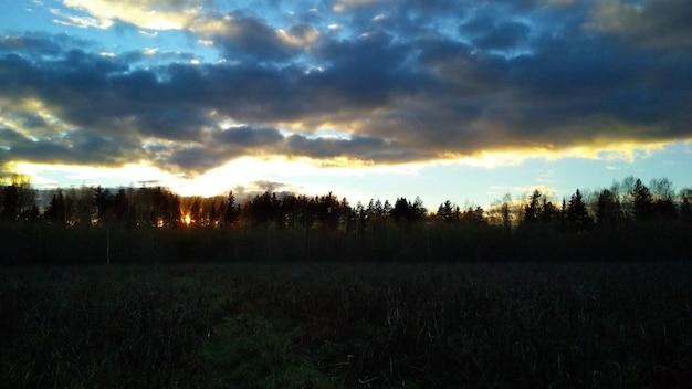 Champ et forêt au coucher du soleil