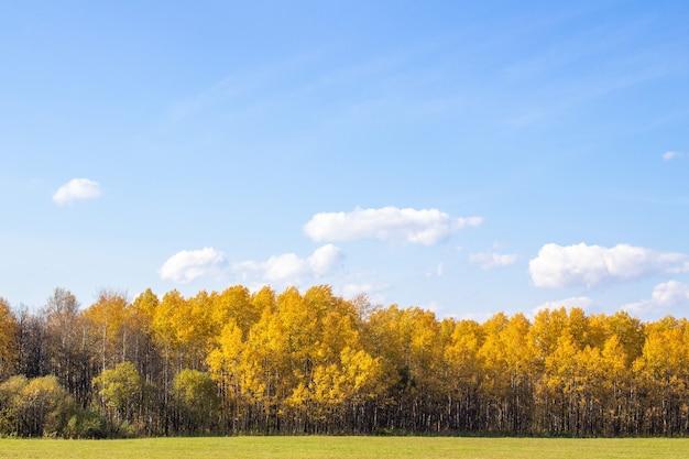 Champ et forêt jaune d'automne. ciel bleu avec des nuages sur la forêt. la beauté de la nature en automne.