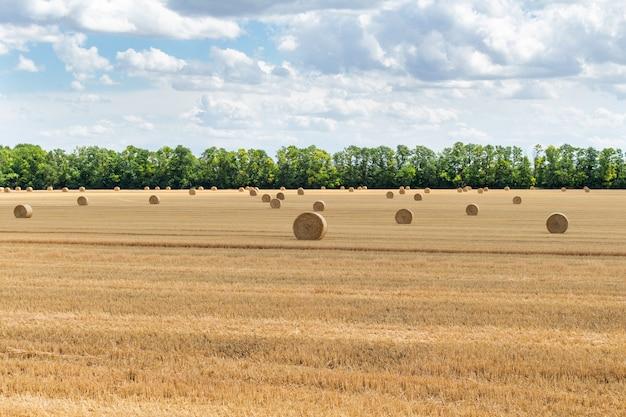 Champ de grains de blé récolté, avec des meules de paille sur fond de ciel bleu nuageux