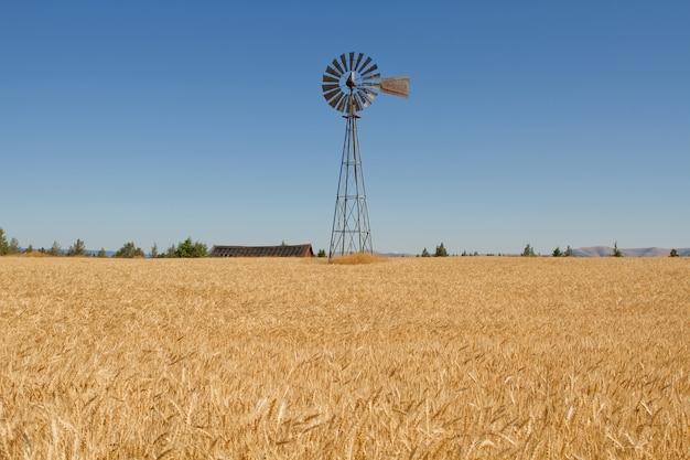 Champ d'herbe de blé avec moulin à vent et grange