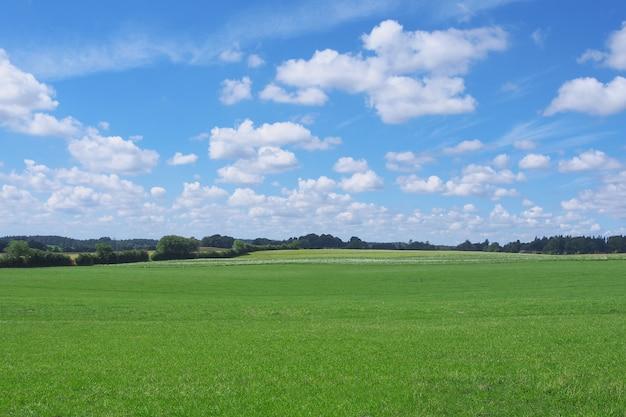 Champ d'herbe et ciel parfait en été