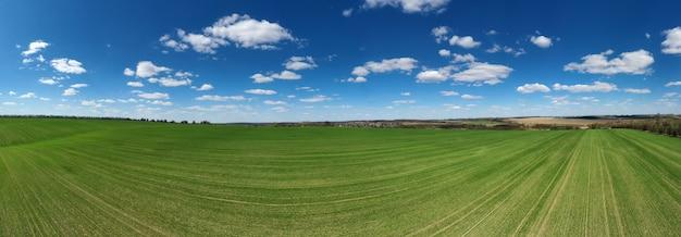 Champ d'herbe et ciel parfait