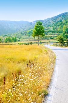 Champ d'herbe dorée près de la route