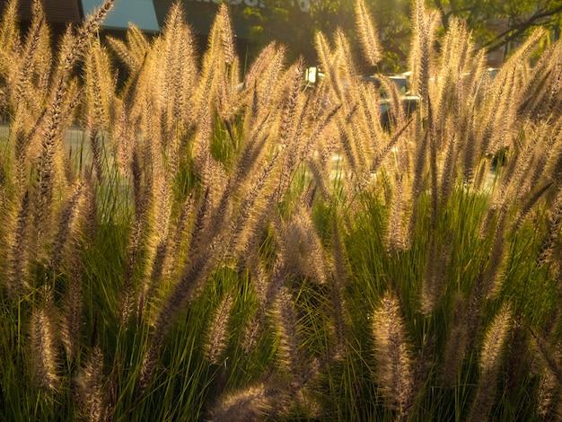 Champ d'herbe douce pendant la journée - idéal pour un beau fond d'écran