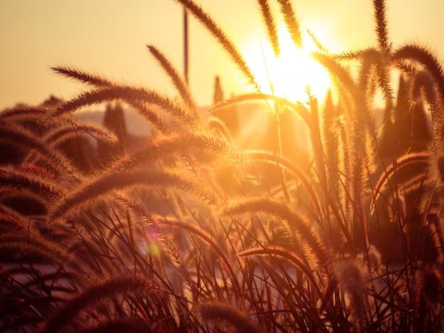Champ d'herbe pendant le coucher du soleil