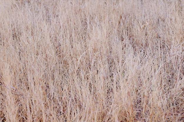 Champ d'herbe sèche, fond de texture d'herbe sèche, closeup fond de paysage d'herbe sèche