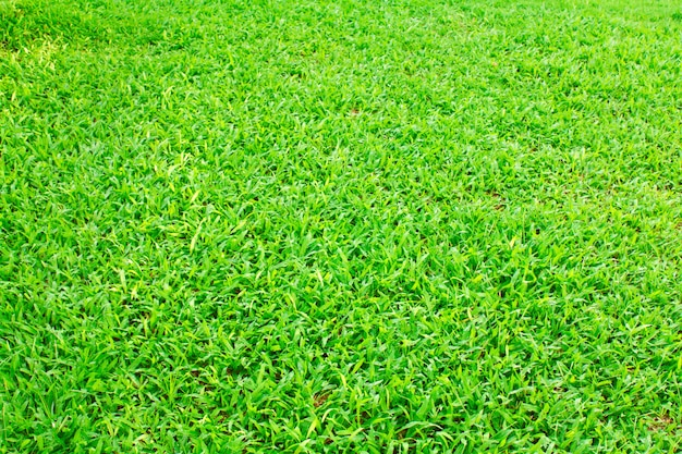 Champ d'herbe texture