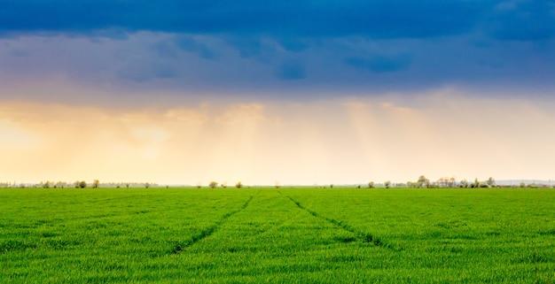 Champ avec herbe verte brillante et ciel pittoresque pendant le coucher du soleil