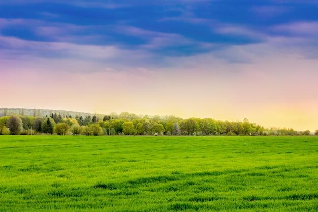 Champ avec herbe verte brillante, forêt au loin et ciel pittoresque au coucher du soleil