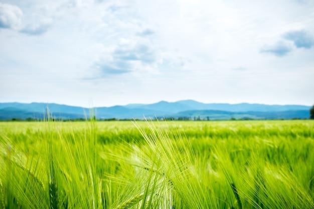 Champ d'herbe verte brillante et montagnes