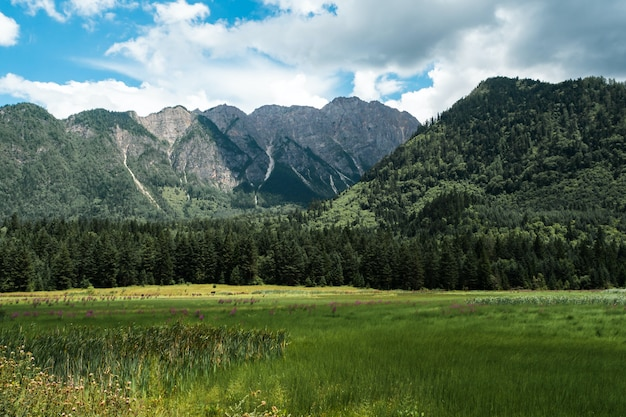 Champ d'herbe verte près des arbres verts et montagne sous ciel bleu pendant la journée