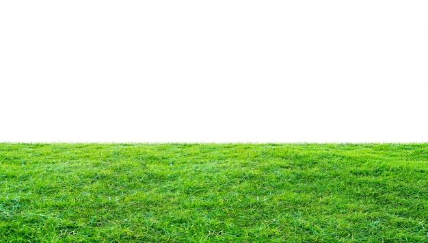 Champ d'herbe verte