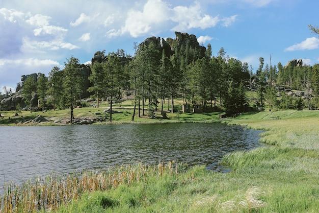 Champ herbeux avec des arbres près de l'eau par une journée ensoleillée