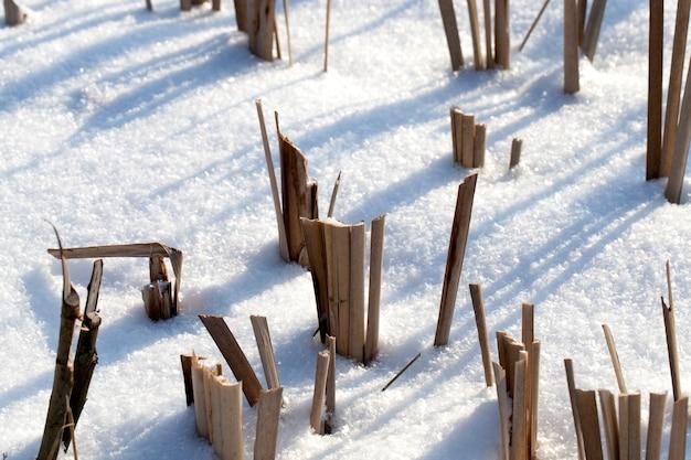 Champ d'hiver avec de la neige fraîche