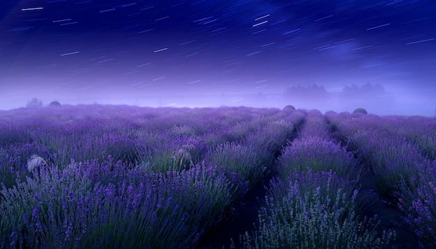 Champ de lavande et ciel étoilé. magnifique paysage nocturne d'été, avec un champ fleuri et la voie lactée.