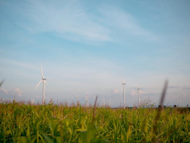 Champ de maïs et ferme éolienne