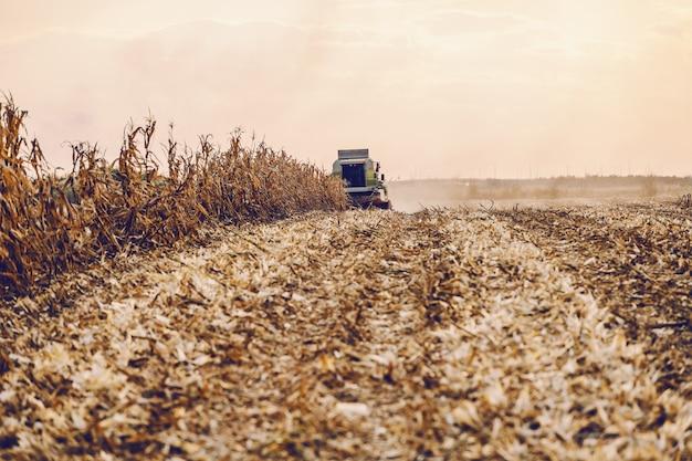 Champ de maïs avec moissonneuse récoltant du maïs et s'avançant