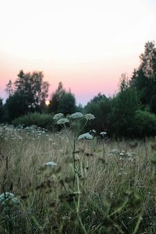 Champ maison paysage coucher de soleil campagne