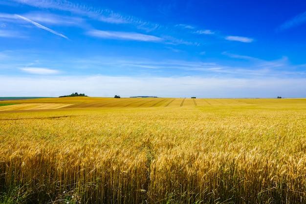 Champ moissonné et vue de la colline verte sur une journée ensoleillée en france