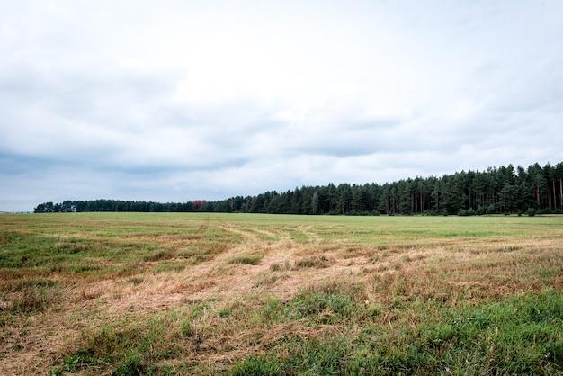 Champ de pays vide et forêt.