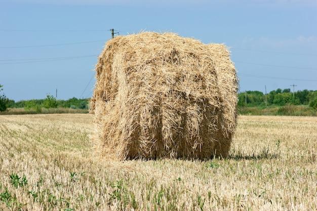 Champ en pente de paille de grande pile de blé