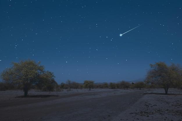 Champ de prairie avec arbres et fond de scène de nuit