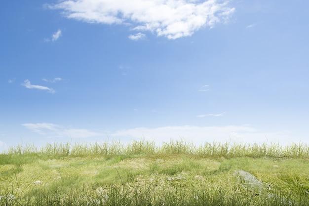 Champ de prairie avec un fond de ciel bleu
