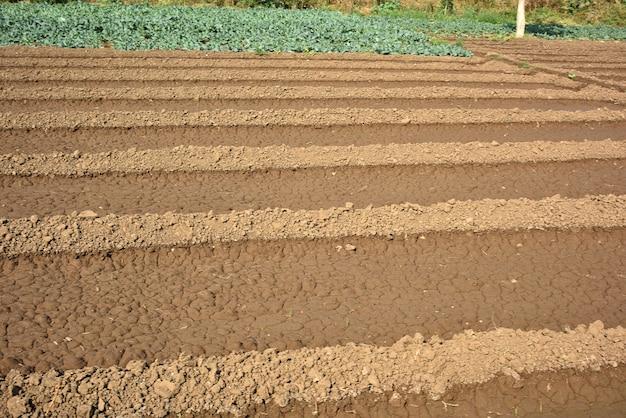 Champ de printemps de céréales avec des graines coupées en rangées ferme biologique